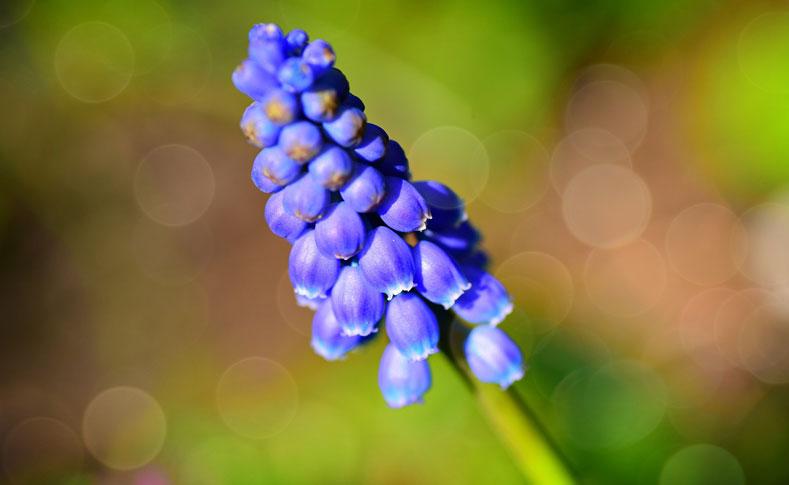 Frühlingsblüher von Jentsch 2