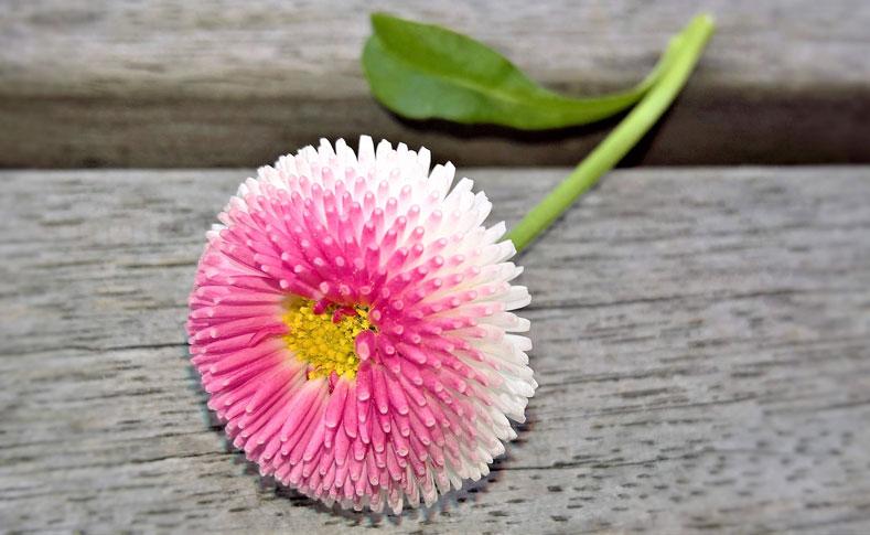 Frühlingsblüher von Jentsch 3