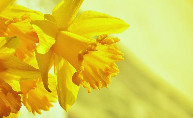 Frühlingsblüher von Jentsch 4