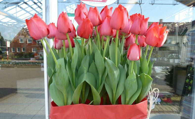 Tulpen von Jentsch