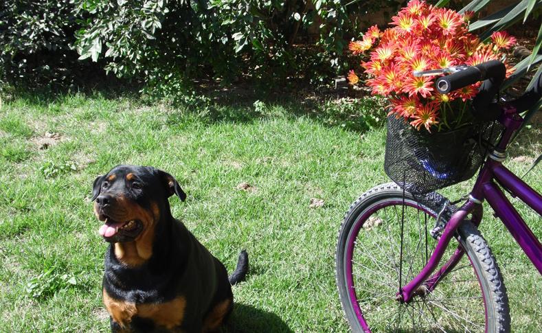 Geschmückte Fahrräder 4