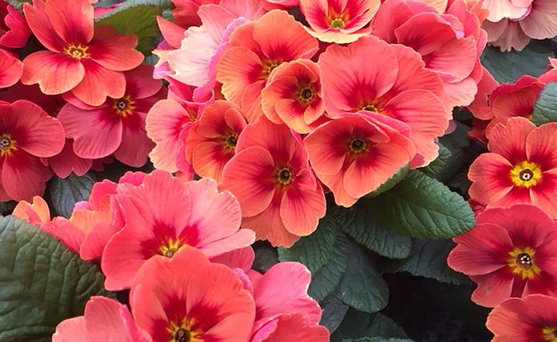 Frühlingsblüher 7