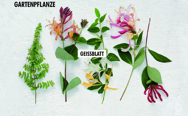 Gartenpflanzen 2