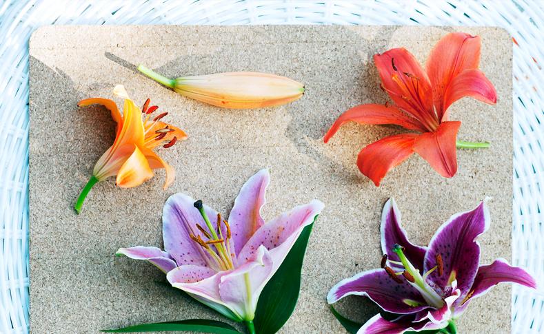Lieblingsblume 2 ... Fotos Quelle: pflanzenfreude.de