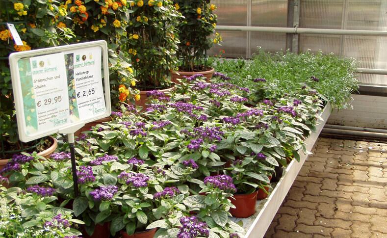 Pflanzen in unseren Gewächshäusern 1