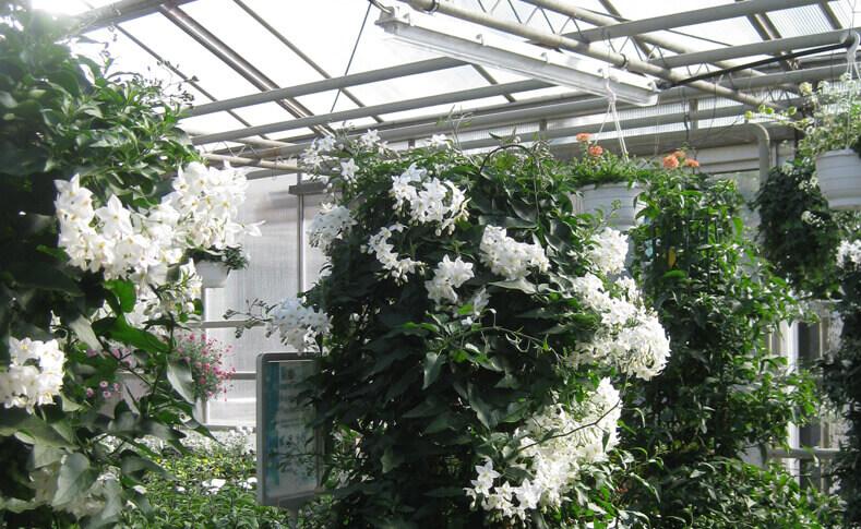 Pflanzen in unseren Gewächshäusern 2