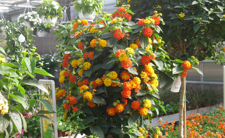 Pflanzen in unseren Gewächshäusern 3