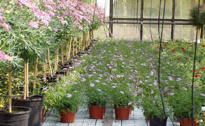 Pflanzen in unseren Gewächshäusern 4
