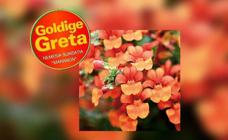 Goldige Greta