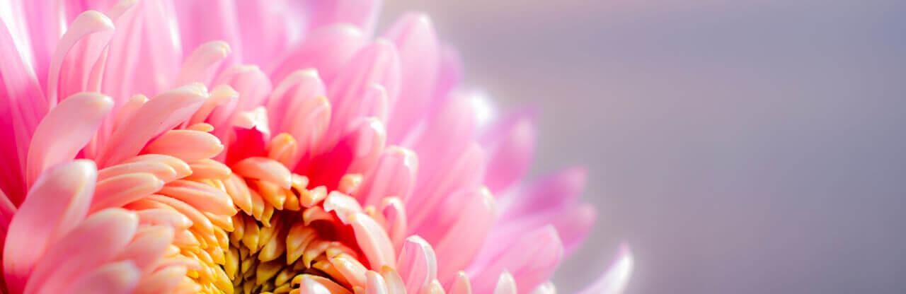 Blumengeschenktage